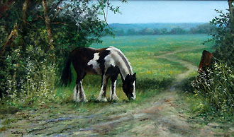 black & white pony 20 x 12 code c
