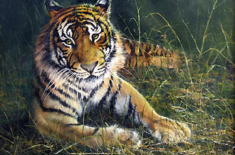 tiger in the grass 16 x 20 code d