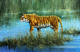 tiger in the reeds 24 x 36 code f